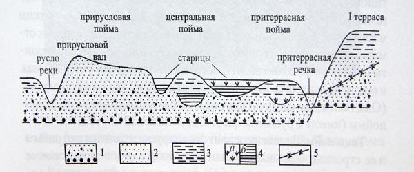 Из-за выклинивания подземных вод из примыкающей первой надпойменной...  Схема строения рельефа поймы равнинной реки...